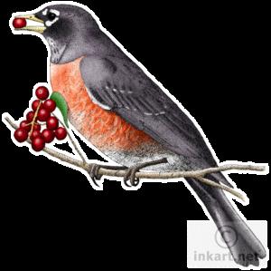 European Robin PNG Clipart PNG Clip art