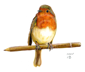 European Robin PNG File PNG Clip art