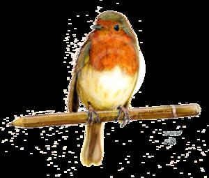 European Robin PNG File PNG Clip art