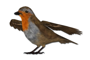 European Robin PNG Free Download PNG Clip art