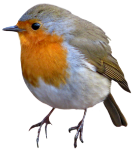 European Robin PNG Image PNG Clip art