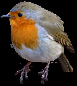 European Robin PNG Image PNG Clip art