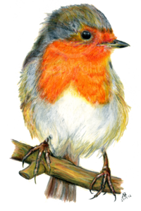 European Robin PNG Photos PNG Clip art