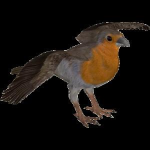 European Robin PNG Pic PNG Clip art