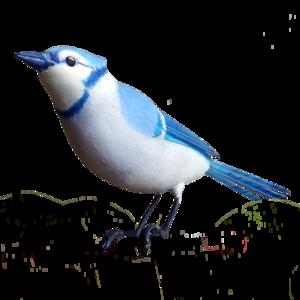 European Robin PNG Transparent Image PNG Clip art