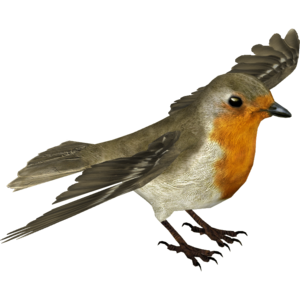 European Robin Transparent Background PNG Clip art