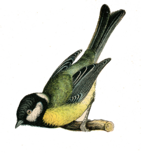 Fairy Bird PNG Clipart PNG icon
