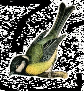 Fairy Bird PNG Clipart PNG Clip art