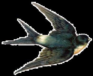 Fairy Bird PNG HD PNG Clip art