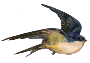 Fairy Bird PNG Photo PNG Clip art