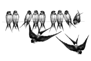 Fairy Bird PNG Picture PNG Clip art
