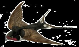 Fairy Bird PNG Transparent PNG Clip art