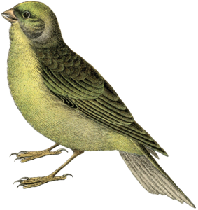 Fairy Bird Transparent PNG PNG Clip art