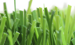Fake Grass PNG Photo PNG Clip art