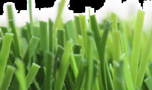 Fake Grass PNG Photo PNG Clip art