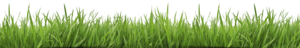 Fake Grass PNG Transparent HD Photo PNG Clip art