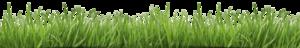 Fake Grass PNG Transparent HD Photo PNG Clip art
