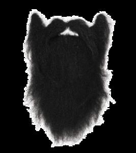Fake Moustache Transparent PNG PNG clipart