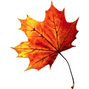 Fall Autumn Leaves Transparent PNG PNG clipart