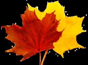 Falling Leaf PNG Free Download PNG Clip art
