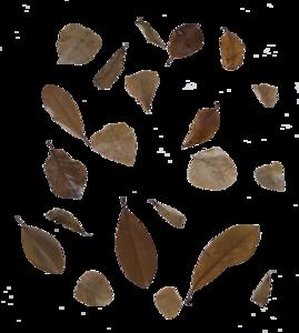 Falling Leaf PNG Transparent Image PNG Clip art