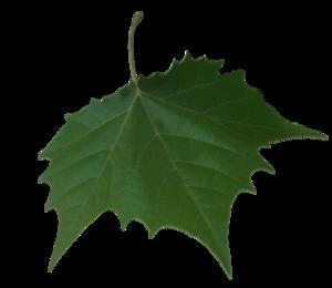 Falling Leaf Transparent Background PNG Clip art
