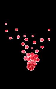Falling Rose Petals Background PNG PNG Clip art