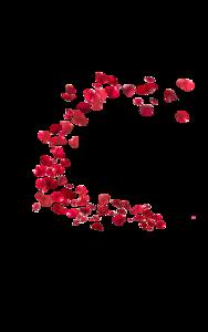 Falling Rose Petals PNG HD PNG Clip art