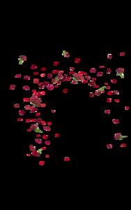 Falling Rose Petals PNG Pic PNG Clip art