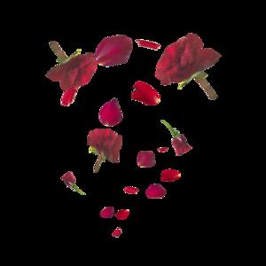 Falling Rose Petals PNG Transparent HD Photo PNG Clip art