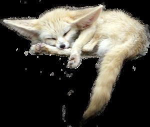 Fennec Fox PNG File PNG Clip art