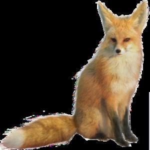 Fennec Fox PNG HD PNG Clip art