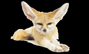 Fennec Fox PNG Pic PNG Clip art