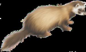 Ferret Background PNG PNG Clip art
