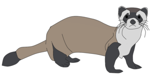 Ferret PNG Clipart PNG icon
