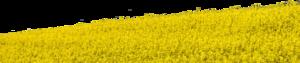 Field PNG Clipart PNG Clip art