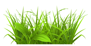 Field PNG File PNG Clip art