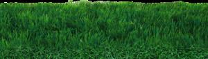 Field PNG Transparent PNG Clip art