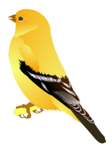 Finch PNG Background Image PNG Clip art