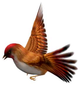 Finch PNG Free Download PNG Clip art