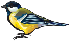 Finch PNG HD PNG Clip art