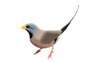 Finch PNG Photos PNG Clip art