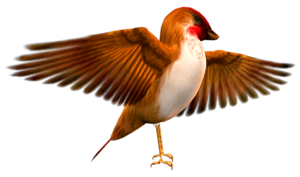 Finch PNG Transparent HD Photo PNG Clip art