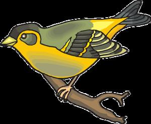 Finch PNG Transparent Image PNG Clip art