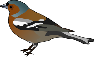 Finch Transparent PNG PNG Clip art