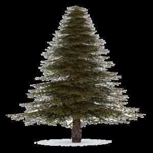 Fir-Tree PNG Image PNG Clip art