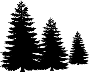 Fir-Tree PNG Pic PNG Clip art