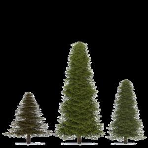 Fir-Tree PNG Transparent Image PNG Clip art