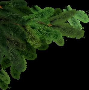 Fir-Tree PNG Clip art