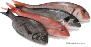 Fish Meat PNG File PNG Clip art
